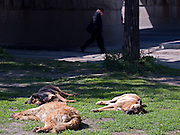 Obdachloser Hund vor dem Kasaner Bahnhof (Kasanski woksal) in Moskau.<br /> <br /> Homeless dogs living on the street infront of the Kazansky Rail Terminal (Kazansky vokzal) in Moscow.