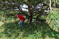ZANDVOORT - lastige ligging, onder een boom in de rough. hoog gras, takken, . Golfbaan The Dunes / Open Golf.    COPYRIGHT KOEN SUYK