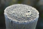 Frosty post
