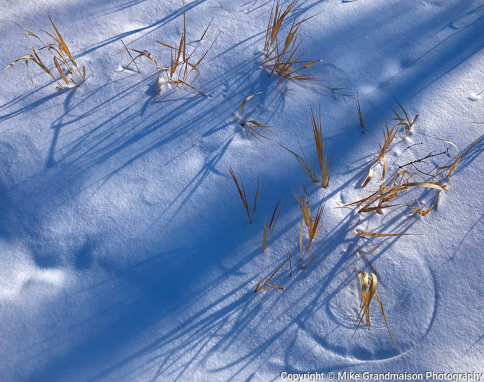 Grasses in snow<br />Winnipeg<br />Manitoba<br />Canada