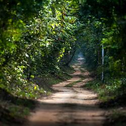 """""""Rodovia Estadual ES-356 na Rebio de Sooretama (Paisagem) fotografado em Linhares, Espírito Santo -  Sudeste do Brasil. Bioma Mata Atlântica. Registro feito em 2014.<br /> <br /> <br /> <br /> ENGLISH: State Highway ES-356 in Sooretama Rebio  photographed in Linhares, Espírito Santo - Southeast of Brazil. Atlantic Forest Biome. Picture made in 2014."""""""