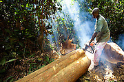 A logger lumbers an Afromosia (Pericopsys elata) tree with only a chainsaw into planks at an artisanal logging operation at Mugbamboli (27km NE of Kisangani), DRC, May 30, 2009. ©Daniel Beltra