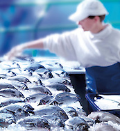 fresh fish counter in a fish shop, food photography