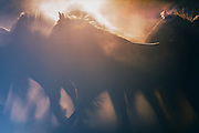 Chariot of Zeus on Wet Plate print shows wild mustangs running into the sunset spinning up dust and dirt as their manes let the sun rays  shine through creating a dreamlike state for the viewer