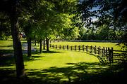 Farm lane, tree line and rail fence snake their way around a paddock.