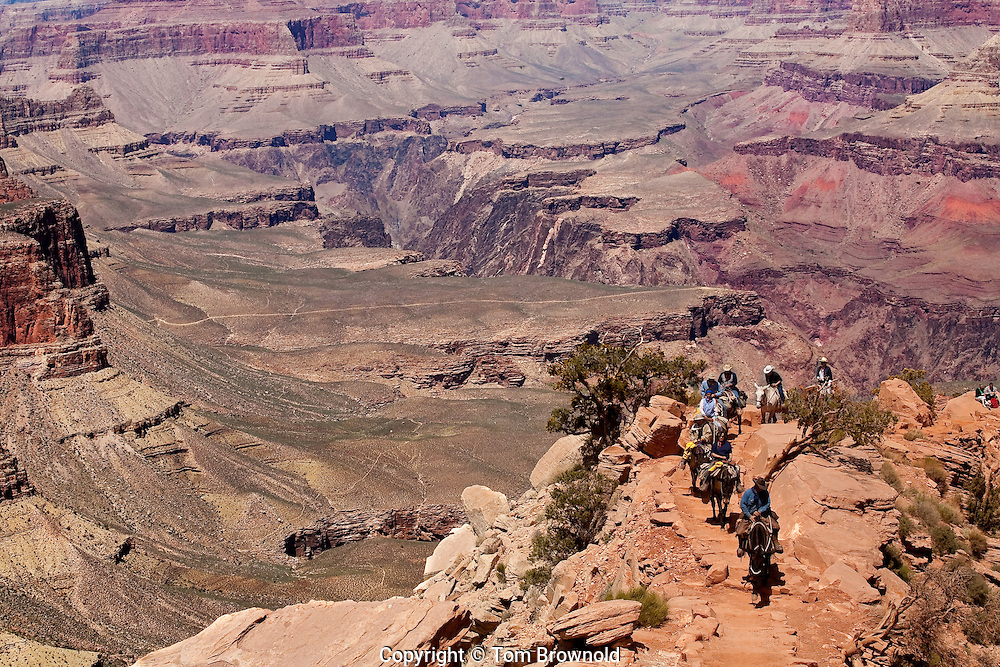 Guide with tourists ascending the South Kaibab trail from Phantom Ranch