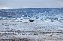 © Licensed to London News Pictures. <br /> 29/01/2015. <br /> <br /> Danby, United Kingdom<br /> <br /> A lone tree stands on a snow covered moorland near Danby in North Yorkshire following overnight snow. A wintery blast causing extremely cold weather is expected to cause some disruption over the next few days.<br /> <br /> Photo credit : Ian Forsyth/LNP