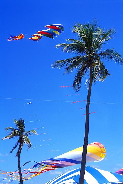 Against a blue sky, kites soar past palm trees during an international kite festivql in Miami Beach.