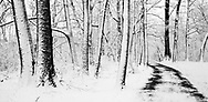 Snow Covered Trees And A Walking Path Through The Woods During Winter In The Park, Sharon Woods, Southwestern Ohio, USA