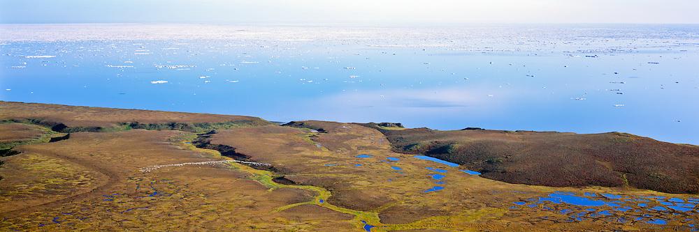 Snow geese fly across Yukon's North Coastline