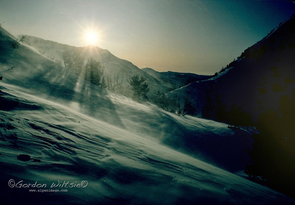 KINGS CANYON NAT. PARK, CA. Winter wind, sastrugi snow & whitebark pines near Glen Pass.
