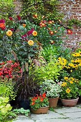 Pot display at Great Dixter with Pennisetum setaceum 'Rubrum', pelargonium, dahlias, begonias and rudbeckia