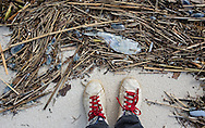 12/19/2015, Dead fish and man o' war on the beach in Long Beach, Mississippi durring a month long fish kill event.  A red tide ( toxic algae growth)  was blaimed for a fish kill event that also killed many ducks and some mammals along beaches in Mississippi along the Gulf of Mexico that started at the deginning of December and continued through the end of the month. Warming tempatures caused by climate change,  make 'red tide' conditions a growing problem on the Gulf Coast.