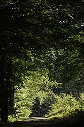 BRUSSELS, BELGIUM - SEPT-21-2006 - WoodNet - PEFC Forest (PHOTO © JOCK FISTICK).