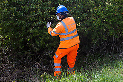 Quainton, UK. 26th April, 2021. An ecologist checks a hedgerow for evidence of bird nesting during tree and hedgerow clearance works for a temporary access road for the HS2 high-speed rail link. Environmental activists continue to oppose the controversial HS2 infrastructure project from a series of protection camps along its Phase 1 route between London and Birmingham.