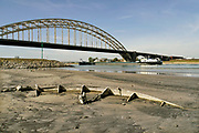 Nederland, the netherlands, Nijmegen, 19-10-2018 Binnenvaartschepen varen in de Waal langs de drooggevallen oever . Door de aanhoudende droogte staat het water in de rijn, ijssel en waal extreem laag . Laagterecord en de laagste officiele stand ooit bij Lobith gemeten . Schepen moeten minder lading innemen om niet te diep te komen . Hierdoor is het drukker in de smallere vaargeul . Door te weinig regenval in het stroomgebied van de rijn is het record verbroken . Het wrak van een klein houten bootje is nog niet eerder zo droog komen te liggen.Foto: Flip Franssen