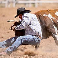Steer wrestler Sheridan Jodie digs in his heels to stop his steer during the Jacobs NNRA Rodeo at the Grants Rodeo Arena Saturday.