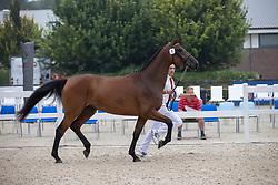 001, Make My Day EB<br /> Nationaal Kampioenschap KWPN<br /> 3 jarige springmerries<br /> © Hippo Foto - Dirk Caremans<br />  15/08/2020
