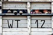 Schoolchildren on a field trip peer out the back of a truck as they travel to historical Inca sites around the Sacred Valley and Cuzco, Peru on September 22, 2005.