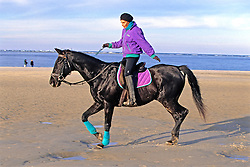 Horse And Rider On Beach