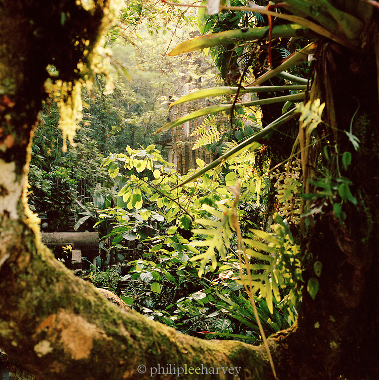 Foliage at the Edward James Surrealist Gardens at Las Pozas, Xilitla, Mexico