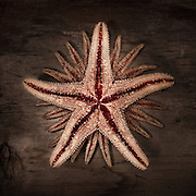 A starfish abstract on wood.<br />