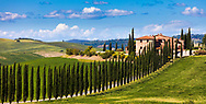 A column of cypress trees along the road to the villa