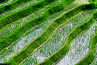 Rice Terraces near Aban, Bali, Indonesia