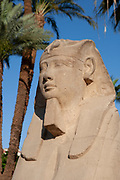 Statue of Rameses II at Karnak Temple Complex, Luxor, Egypt