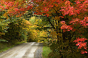 Road near Stowe VT lined with Maple trees in fall colors.