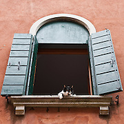VENICE, ITALY - AUGUST 27:  A cat looks downfrom a windowsill in Murano on August 27, 2011 in Venice, Italy. Dingo is the Anglo-Venetian association part of the AISPA,  founded in 1965 by Helen Saunders and Elena Scapabolla and is devoted to the welfare of venetian stray cats. Cats in Venice