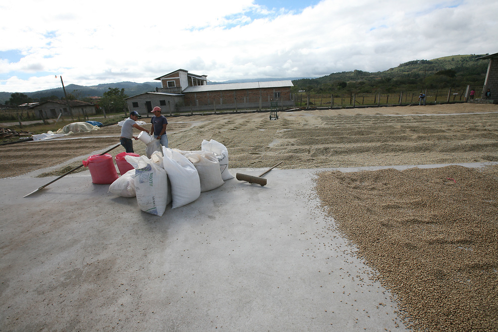 Men put sun-dried coffee into sacks at the COARENE coffee mill. COARENE, Cooperativa Agropecuaria Regional Nuevo Edén, is a Fairtrade-certified coffee-producing organisation in San Juan, Intibucá, Honduras.
