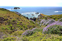 Pacific Coastline; just south of the Russian River estuary at Jenner; Sonoma County; California; USA. 20130429072<br /> <br /> Copyright Image from Victor Patterson, 54 Dorchester Park, Belfast, UK, BT9 6RJ<br /> <br /> Tel: +44 28 9066 1296<br /> Mob: +44 7802 353836<br /> Voicemail +44 20 8816 7153<br /> Skype: victorpattersonbelfast<br /> Email: victorpatterson@me.com<br /> Email: victorpatterson@ireland.com (back-up)<br /> <br /> IMPORTANT: If you wish to use this image or any other of my images please go to www.victorpatterson.com and click on the Terms & Conditions. Then contact me by email or phone with the reference number(s) of the image(s) concerned.