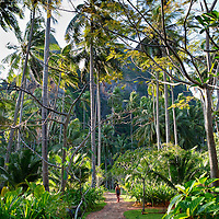 Woman strolls down path under palm trees, Rayavadee resort, Krabi, Thailand