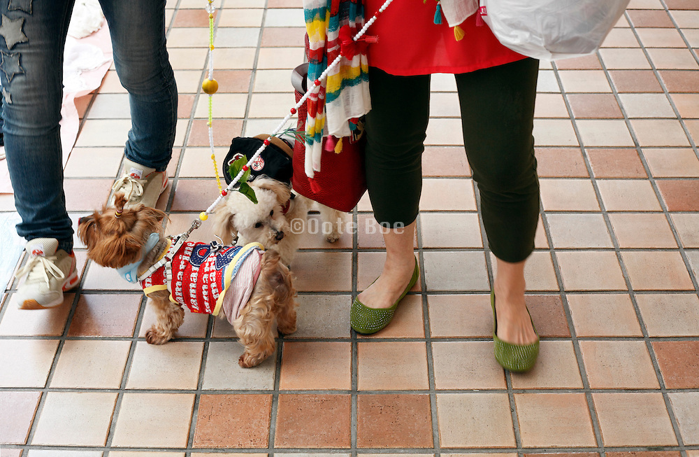 women with dressed up little pet dogs