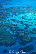 patch reefs on Little Bahama Bank,<br /> off Walker's Cay, <br /> Abaco Islands, Northern Bahamas,<br /> ( Western Atlantic Ocean )