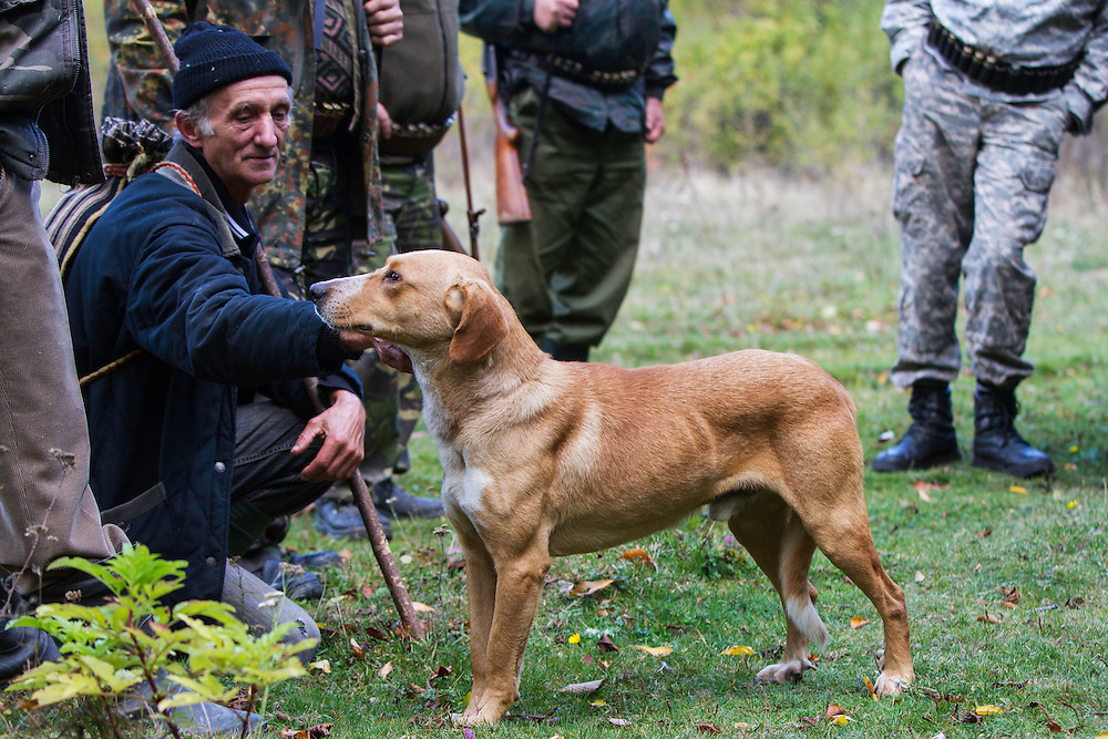 Romanian man helping as a driver during a driving hunt for Wild boar (Sus scrofa) and petting hunting dog. Mehadia, Caras Severin, Romania.