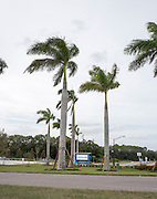 Sarasota, Florida, USA. General view of the Nathan Benderson Park. Rowing Course for the 2017 FISA World Rowing Championships.  Thursday  27/10/2016 [Mandatory Credit; Peter SPURRIER/Intersport Images]