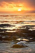 Hawaiian monk seals, Neomonachus schauinslandi (formerly Neomonachus schauinslandi ), mother and pup at sunset, Papaloa Beach, Kalaupapa Peninsula, Molokai Island, Hawaii, USA ( Central Pacific Ocean ) (digital composite)