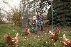 Father and son are tracing chicken at farm, Bavaria, Germany