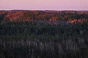 Red of the Dusk | Setting sun illuminates tree tops of boreal forests in Krustkalni Nature Reserve