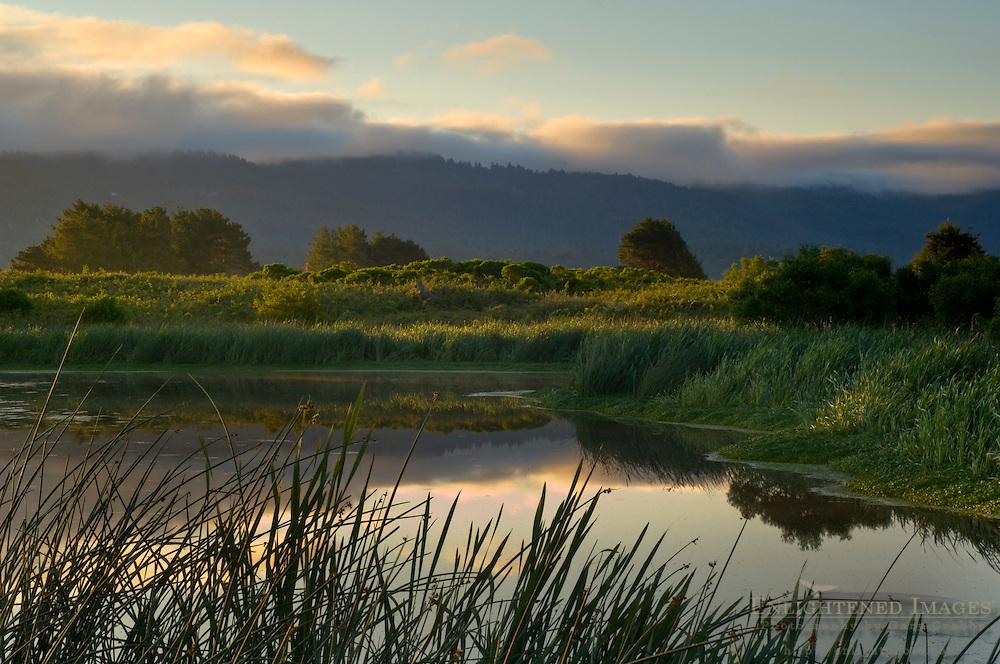 Sunrise light and morning fog at the Arcata Marsh, Arcata, Humboldt County, California