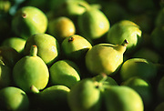 Close up selective focus photograph of a bushels of Calimyrna Figs