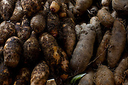 Belo Horizonte_MG, Brasil...80 anos do Mercado Central. Na foto comercio de legumes...80 years of Mercado Central. In this photo some vegetables...Foto: LEO DRUMOND / NITRO