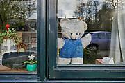 Nederland, Ubbergen, 1-4-2020  In het hele land staan duizenden beren voor de ramen, zodat kinderen knuffels kunnen zoeken als ze even een frisse neus halen. Na België en Australië is er een Nederlandse versie van de zogenoemde Berenjacht ontstaan. Het spel helpt kinderen in een tijd van corona met buitenspelen.           Foto: Flip Franssen