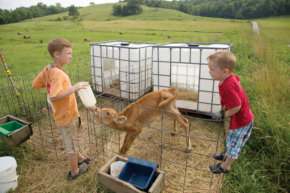 Gus and Harlan feed the new calves at Laurel Valley Creamery near Galipolis. (Will Shilling/CRAVE)