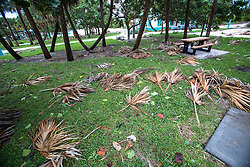 October 7, 2016 - Florida, U.S. - Palm fronds litter the picnic area at Riviera Beach Municipal Beach after the passing of Hurricane Matthew Friday morning, October 7, 2016. (Credit Image: © Lannis Waters/The Palm Beach Post via ZUMA Wire)