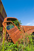 Old rusty truck at Kestner Homestead, Quinault Rain Forest, Olympic National Park, Washington