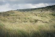 Grases overtaking dunes in Mason Bay, The Southern Circuit, Stewart Island / Rakiura, New Zealand Ⓒ Davis Ulands | davisulands.com