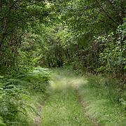 Green way, Kintyre, Argyll & Bute, Scotland.